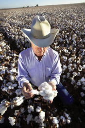 cotton seed selection