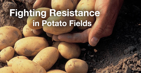 Fighting Resistance in Potato Fields