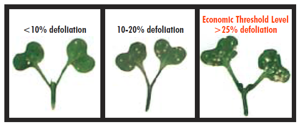 levels of seedling damage