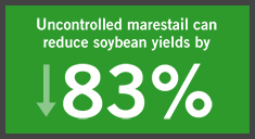 uncontrolled marestail can reduce soybean yields by eight percent