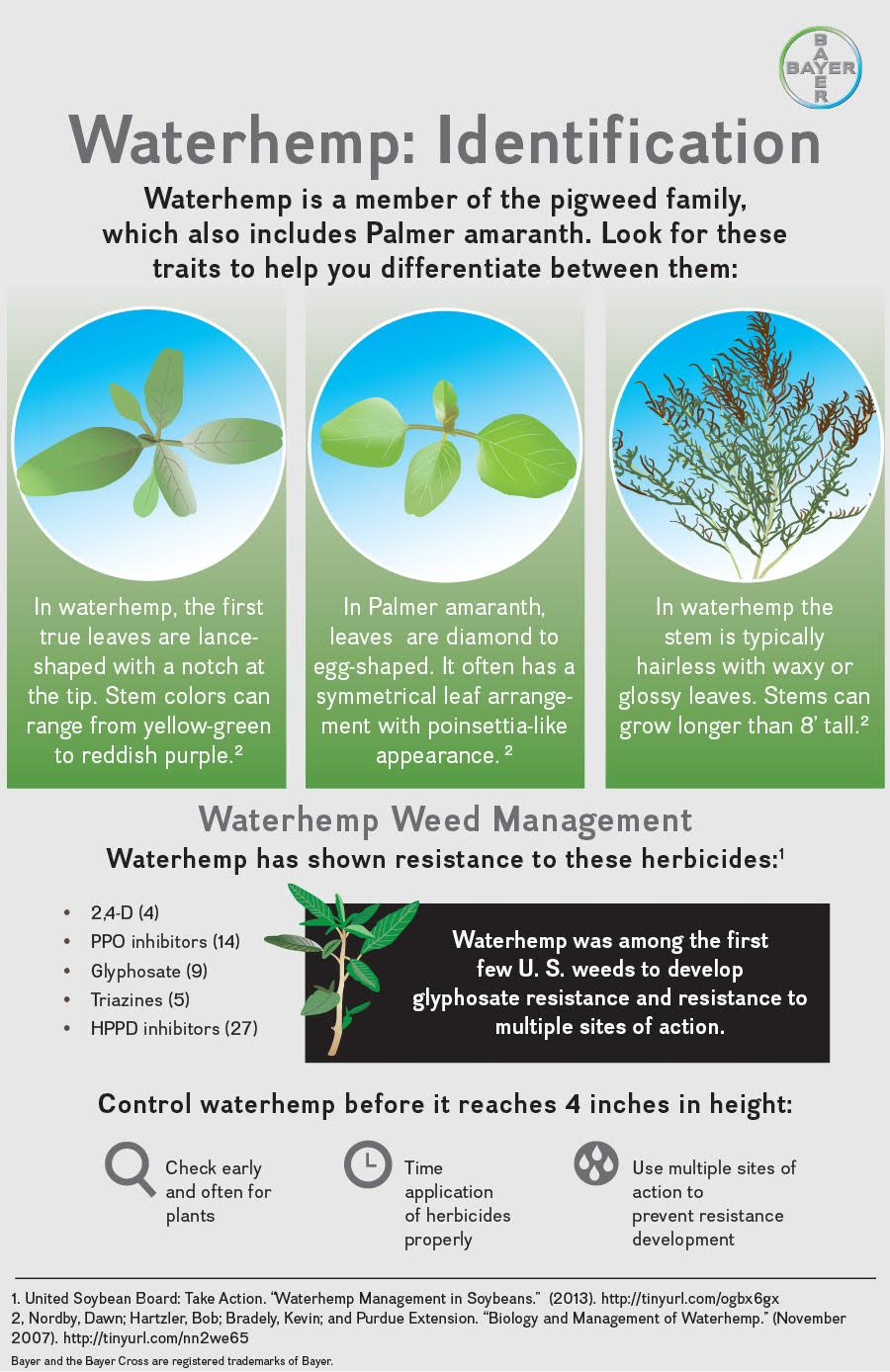 Waterhemp infographic