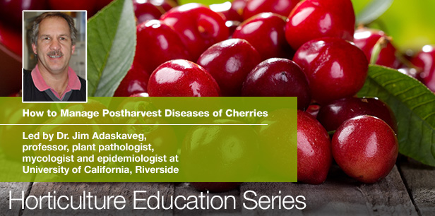 Postharvest Diseases of Cherries