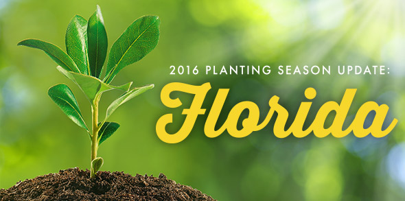 2016 Planting Season Update: Florida