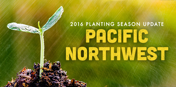 2016 Planting Season Update: Pacific Northwest