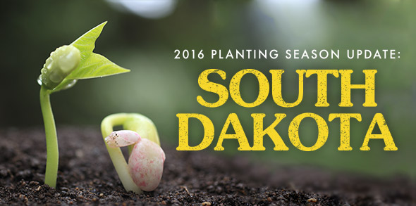 2016 Planting Season Update: South Dakota