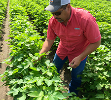 Bayer's Rick Hernandez in Texas cotton field