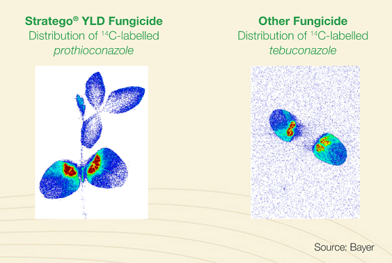Stratego YLD compared to other fungicides