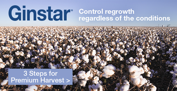 Ginstar - control regrowth regardless of the conditions