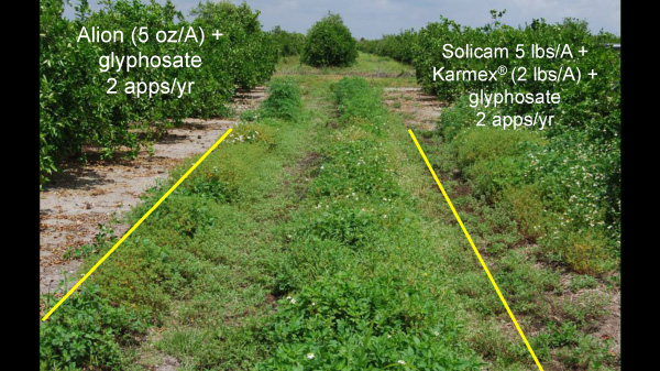 Citrus; Fla.; 2009-2010. Weed control after four applications