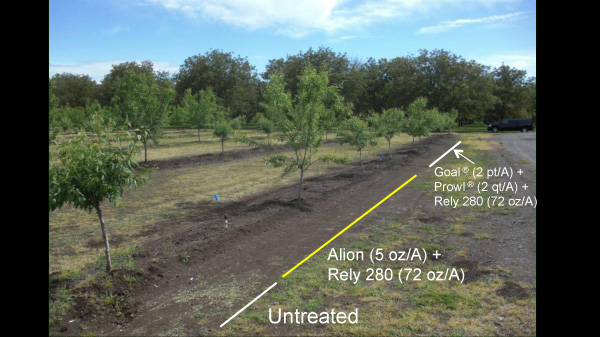 Almonds; Calif.; 2009. Weed control six months after