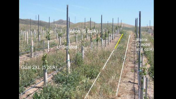 Grapes; Calif.; 2009. Weed control six months after