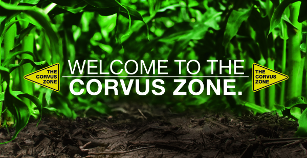 Welcome to the Corvus Zone.