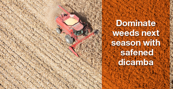 Dominate weeds next season with safened dicamba
