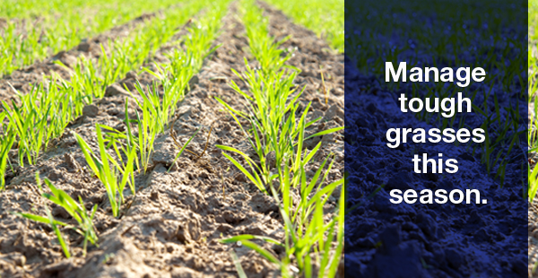 Manage tough grasses this season.