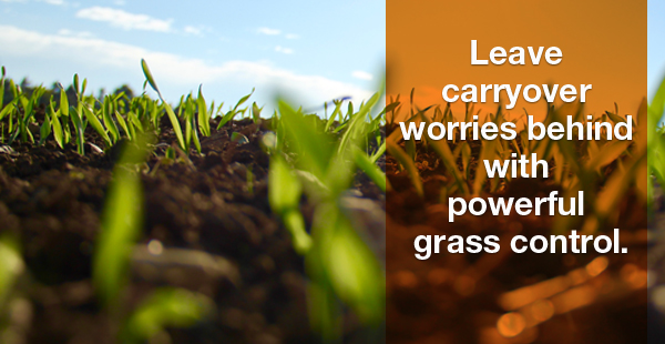 Leave carryover worries behind with powerful grass control.
