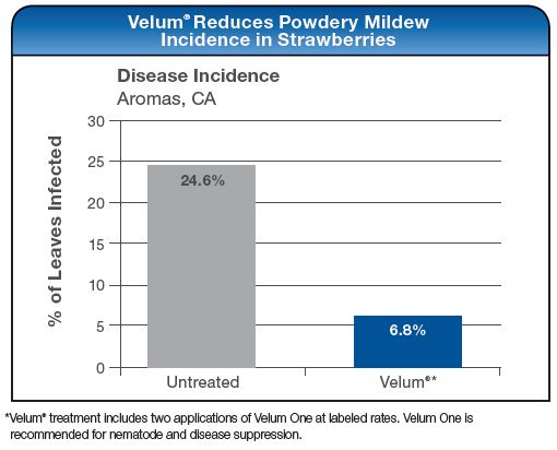 Velum Reduces Powdery Mildew Incidence in Strawberries