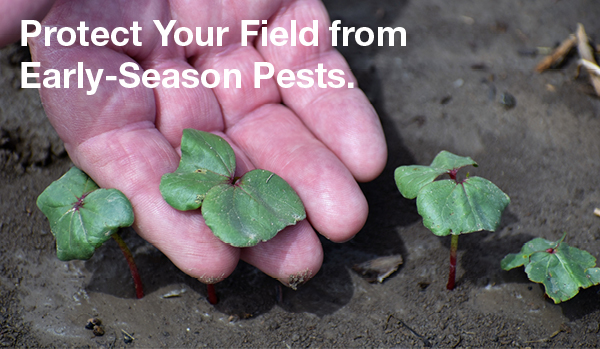 "Hand inspecting young seedlings with callout to ""protect your field from early season pests"""