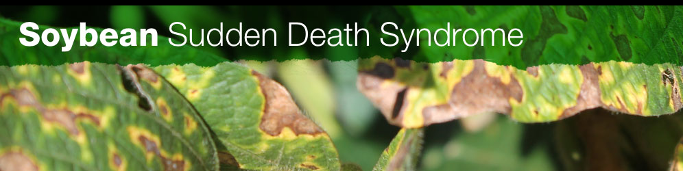 Soybean SDS site banner